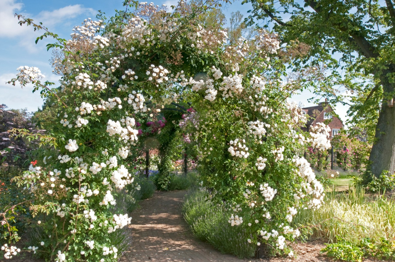 Laubengang Rosen Classic Garden Elements