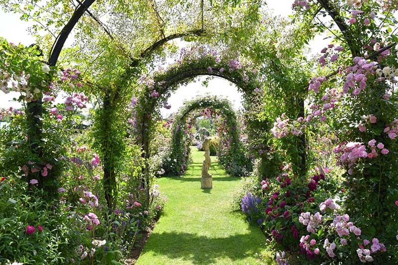 Laubengang-St.-Albans-im-Rosarium-Peter-Beales-Roses-1