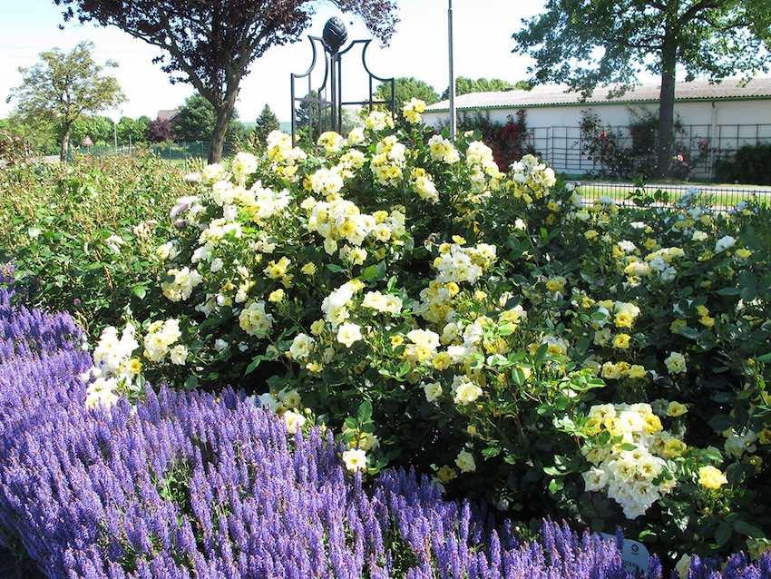 Metall Rosenobelisk I mit Lavendel und gelben Rosen bewachsen