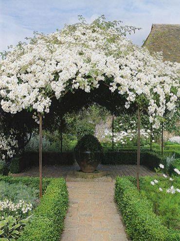 Sissinghurst Pavillon mit weißer Kletterrose 'mulliganii'