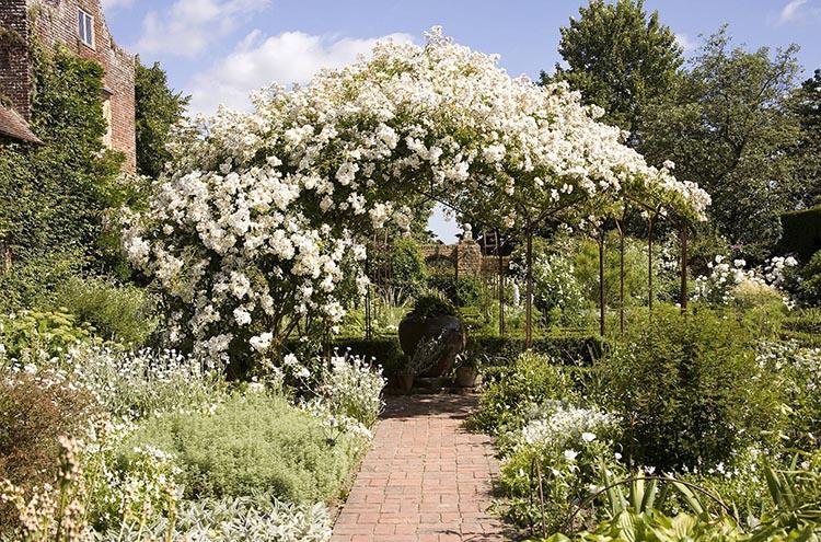 Weiße Kletterrosen auf Metall Pavillon in einem weißen Garten