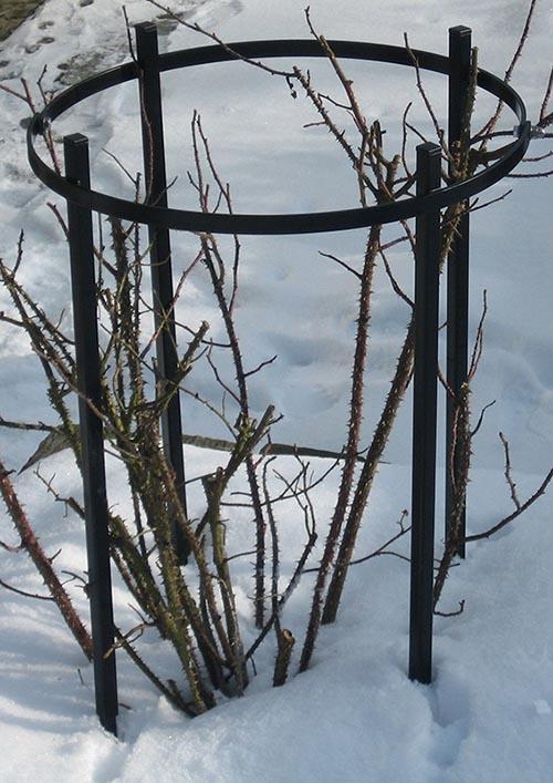 Winterfotos der Metall Rosenstütze Jean Vibert