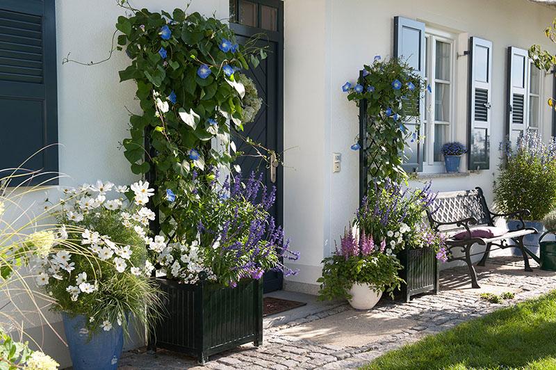 rankgitter aus edelstahl f r rosen und blumen vom hersteller kaufen. Black Bedroom Furniture Sets. Home Design Ideas