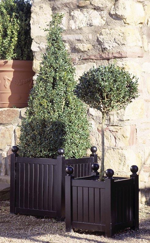 Zwei unterschiedliche Caisse Versailles Pflanzkübel aus Metall mit Bux Bepflanzung