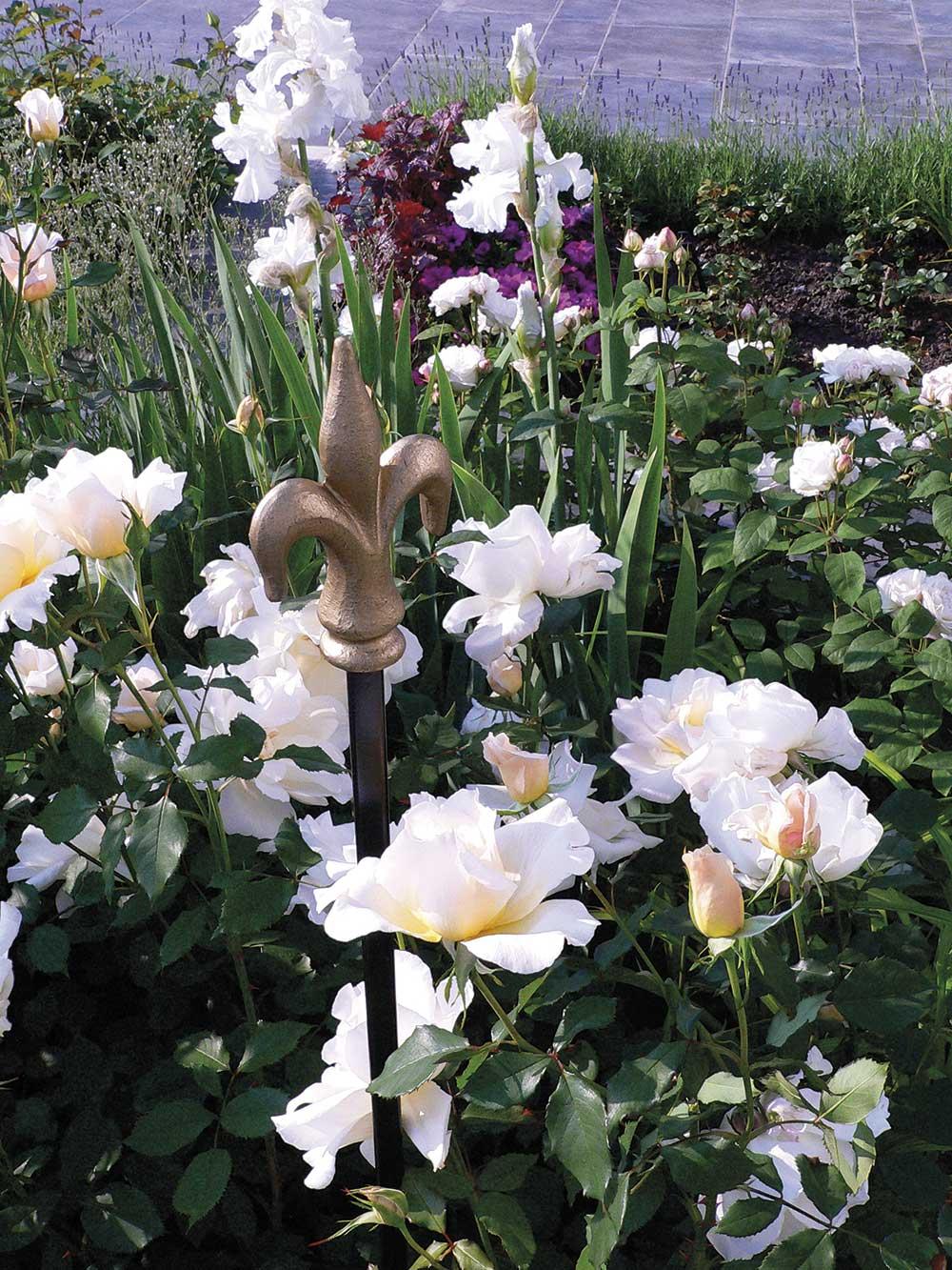 Rosenstäbe im Beet mit weißen Blumen