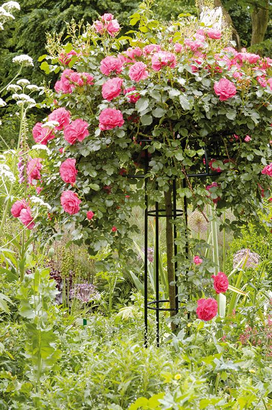rosenschirm giverny online bestellen classic garden. Black Bedroom Furniture Sets. Home Design Ideas