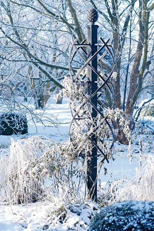 rosensäule charleston mit raureif im winter