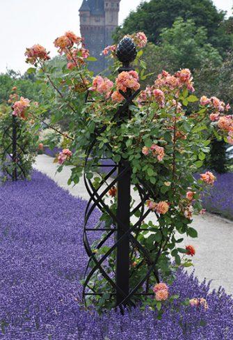 Rosensäule mit Kletterrose Aloha und Lavendel