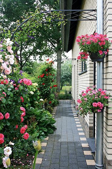 halber rosenbogen mit kletterrosen
