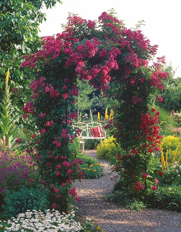 rosenbogen rose maria lisa