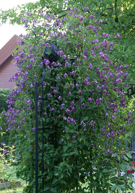 Clematisobelisk Classic Garden Elements