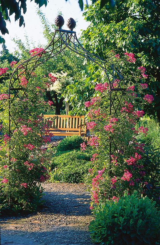 viktorianischer rosenbogen kiftsgate classic garden elements de. Black Bedroom Furniture Sets. Home Design Ideas