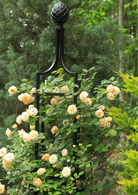 rankobelisk aus metall mit cremegelben rosen