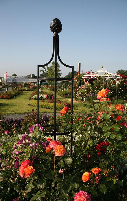 rankobelisk mit rosen im kordes schaugarten
