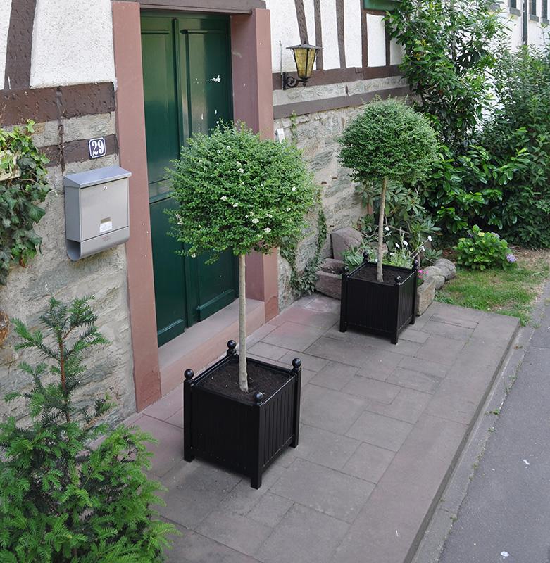 Pflanzkübel Versailles mit Ligusterkugeln