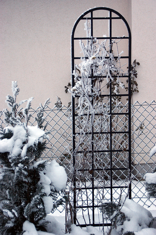 Rankhilfe Burlington im Winter