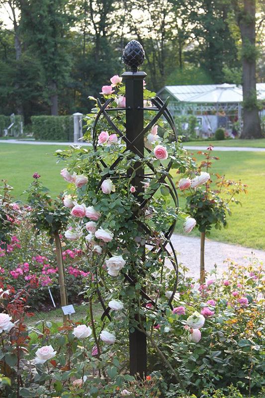 rosensäule mit englischen rosen