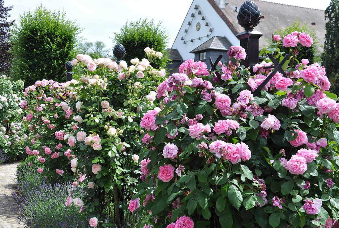 details der rosensäule charleston