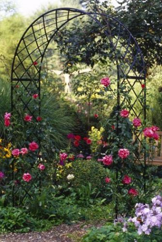 rosenbogen garten pflanzen