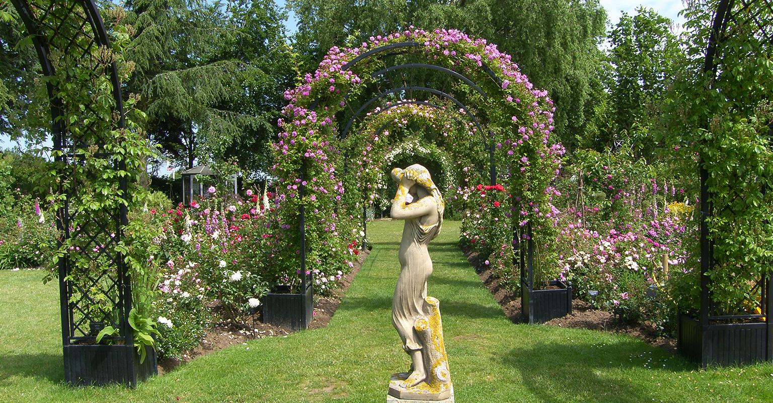 Rosenbögen Portofino im Peter Beales Garten