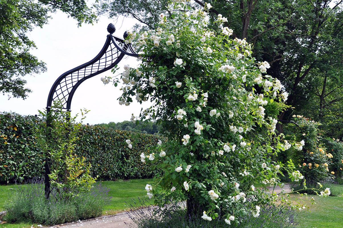 viktorianischer rosenbogen brighton classic garden. Black Bedroom Furniture Sets. Home Design Ideas