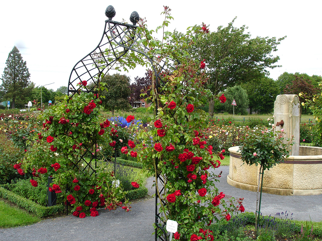 Rosenbogen im Kordes Schaugarten