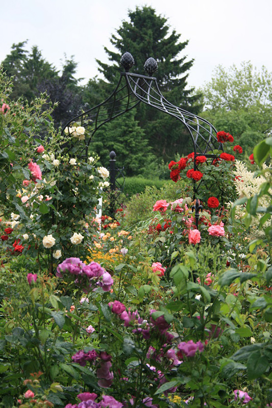 Rosenbogen Kiftsgate im bunten Rosengarten