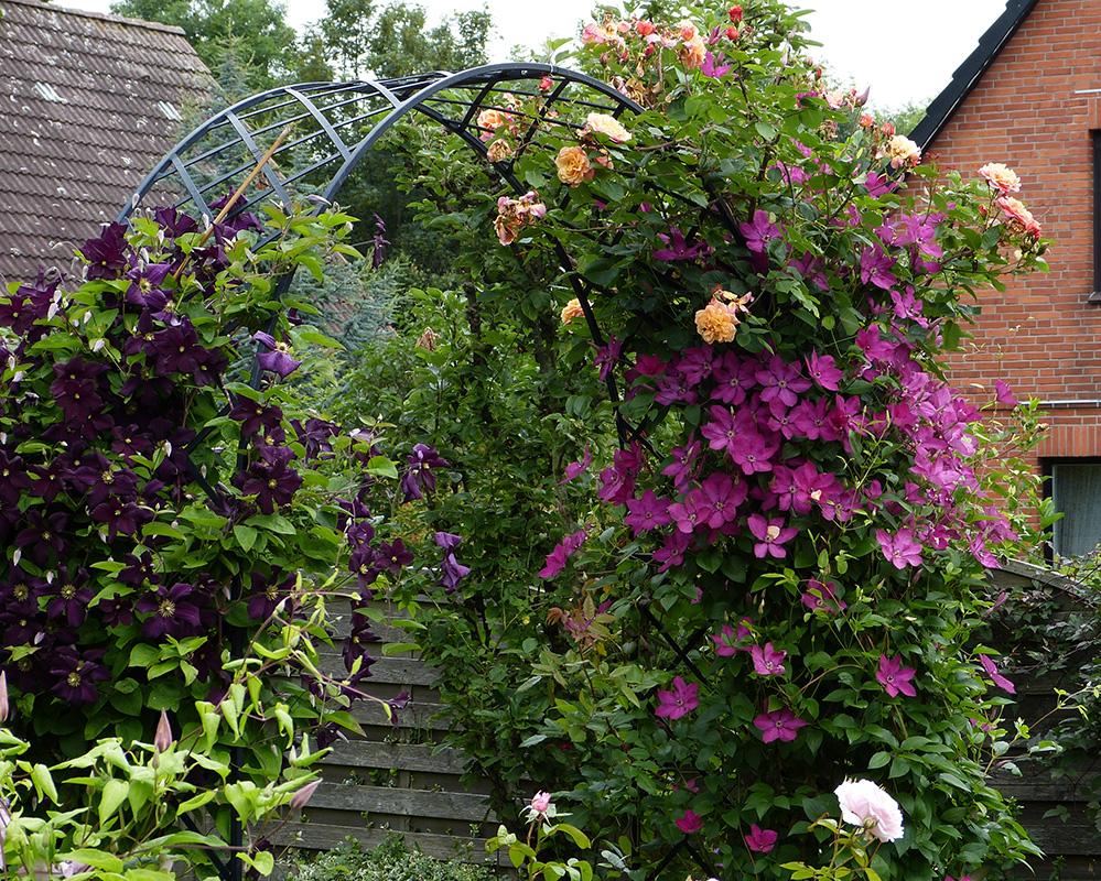 Rosenbogen mit Clematis und Rose
