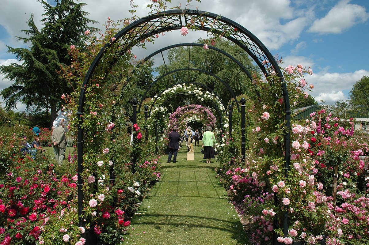 Rosenbogen Portofino im Rosengarten