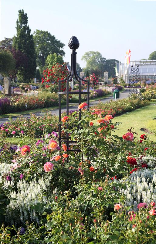 Rosenobelisk im Rosengarten Cordes