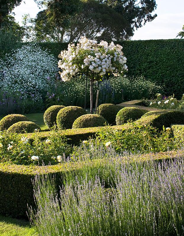 Rosenschirm im weißen Garten
