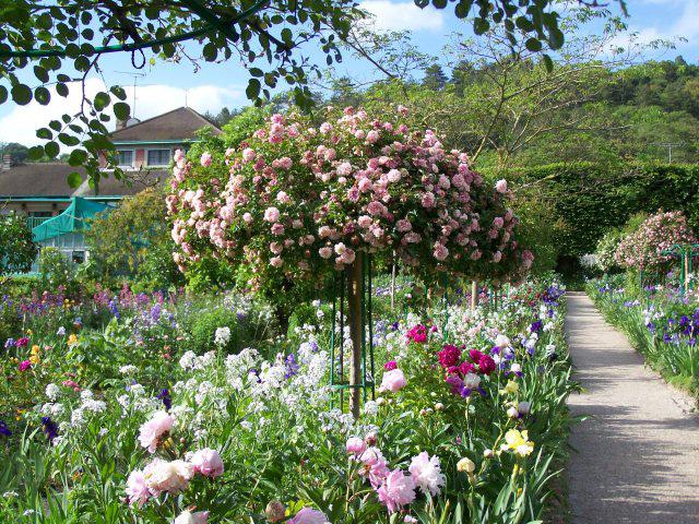 Rosenschirm im Mentsgarten in Giverny