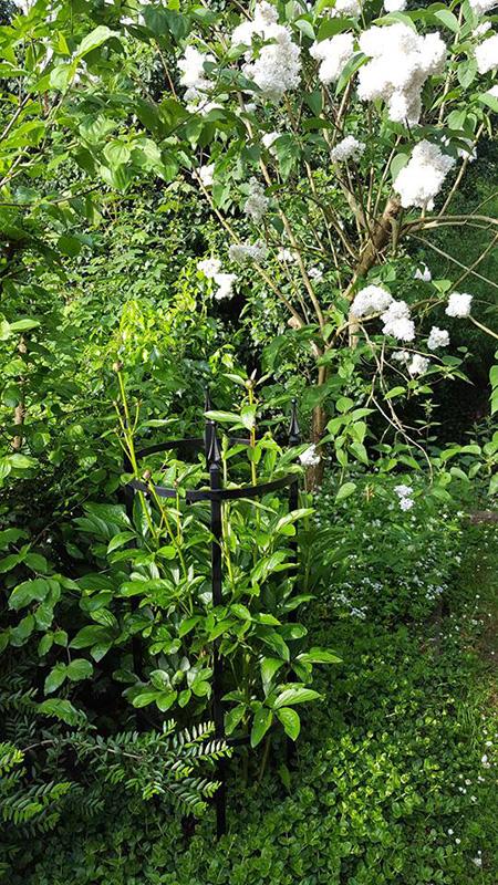 Rosenstütze Geschwind im Frühlingsgarten