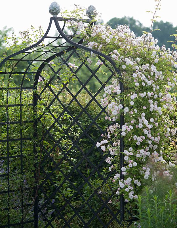 viktorianische Rosenlaube mit Rambler