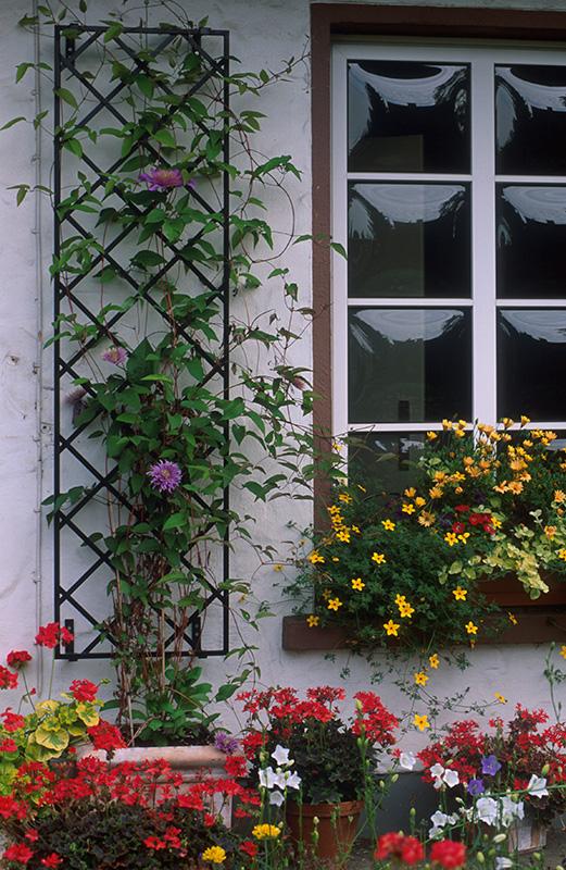 Wandgitter mit bepflanzten Kübel