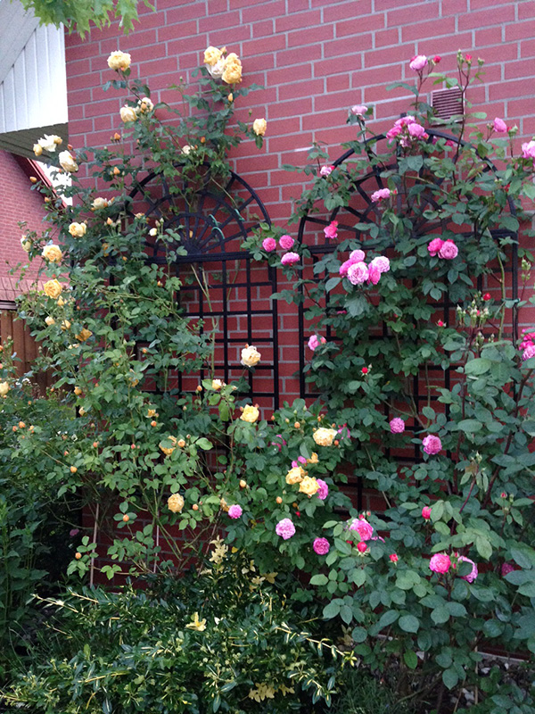 variables treillage rankgitter aus stahl classic garden. Black Bedroom Furniture Sets. Home Design Ideas