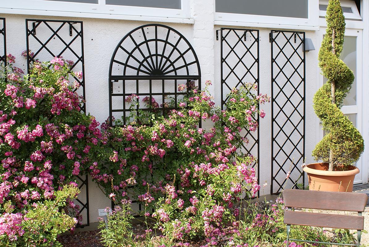 Wandspaliere im Rosengarten Zweibrücken
