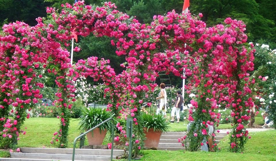 Metall Rosenbogen mit roten Rosen