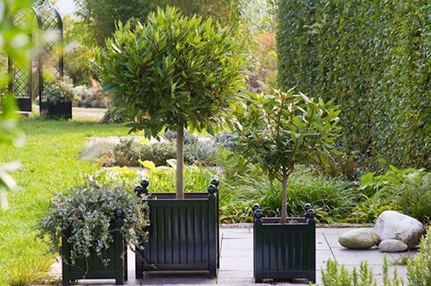 traditionell-bepflanzter-Versailler-Pflanzkübel