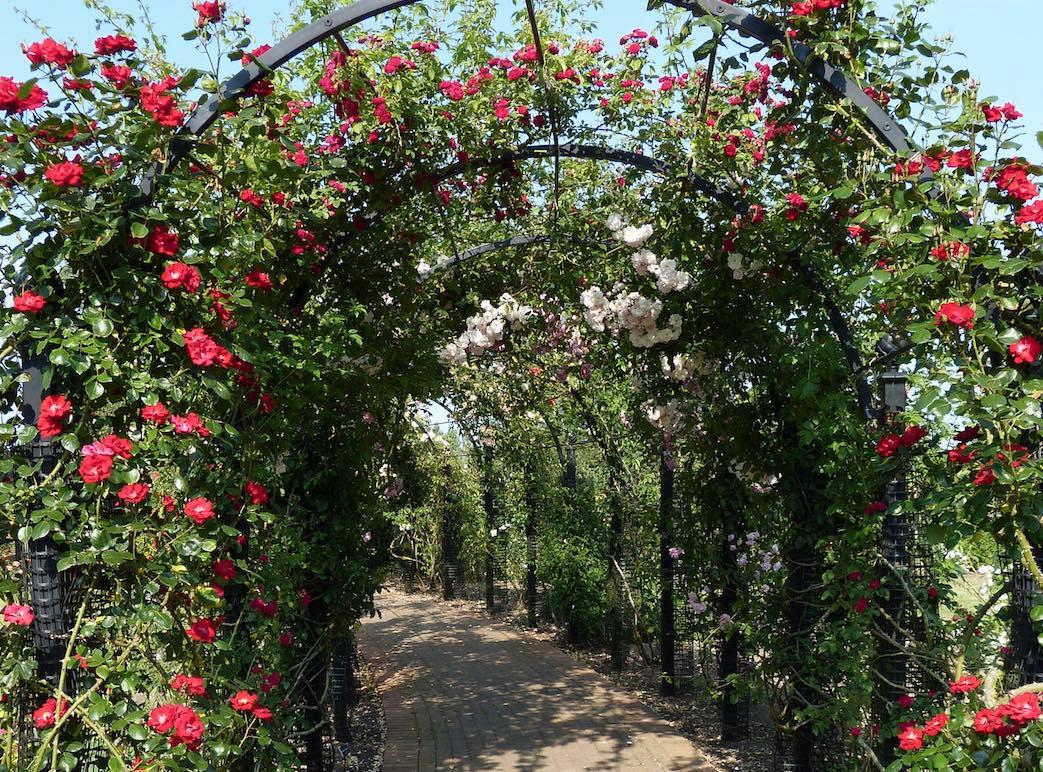 Laubengang aus Metall mit roten Rosen