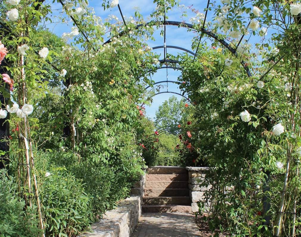 Laubengang aus Metall mit weißen Rosen und Steintreppe