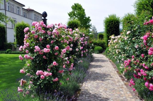 Rankhilfen für Rosen im Garten zum Haus, Schloss,