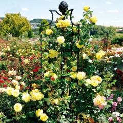 Rosenobelisk für gelbe Rosen,