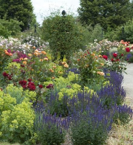 Rosenobelisk und Rankgitter im Garten,