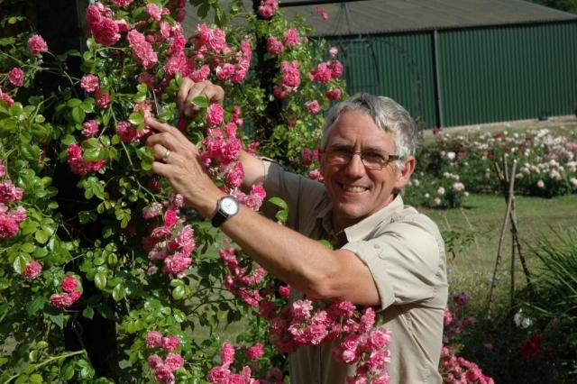 Gärtner vor Laubengang mit rosa Rosen