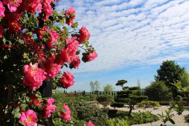 Rote Rosen im japanischen Garten an Laubengang