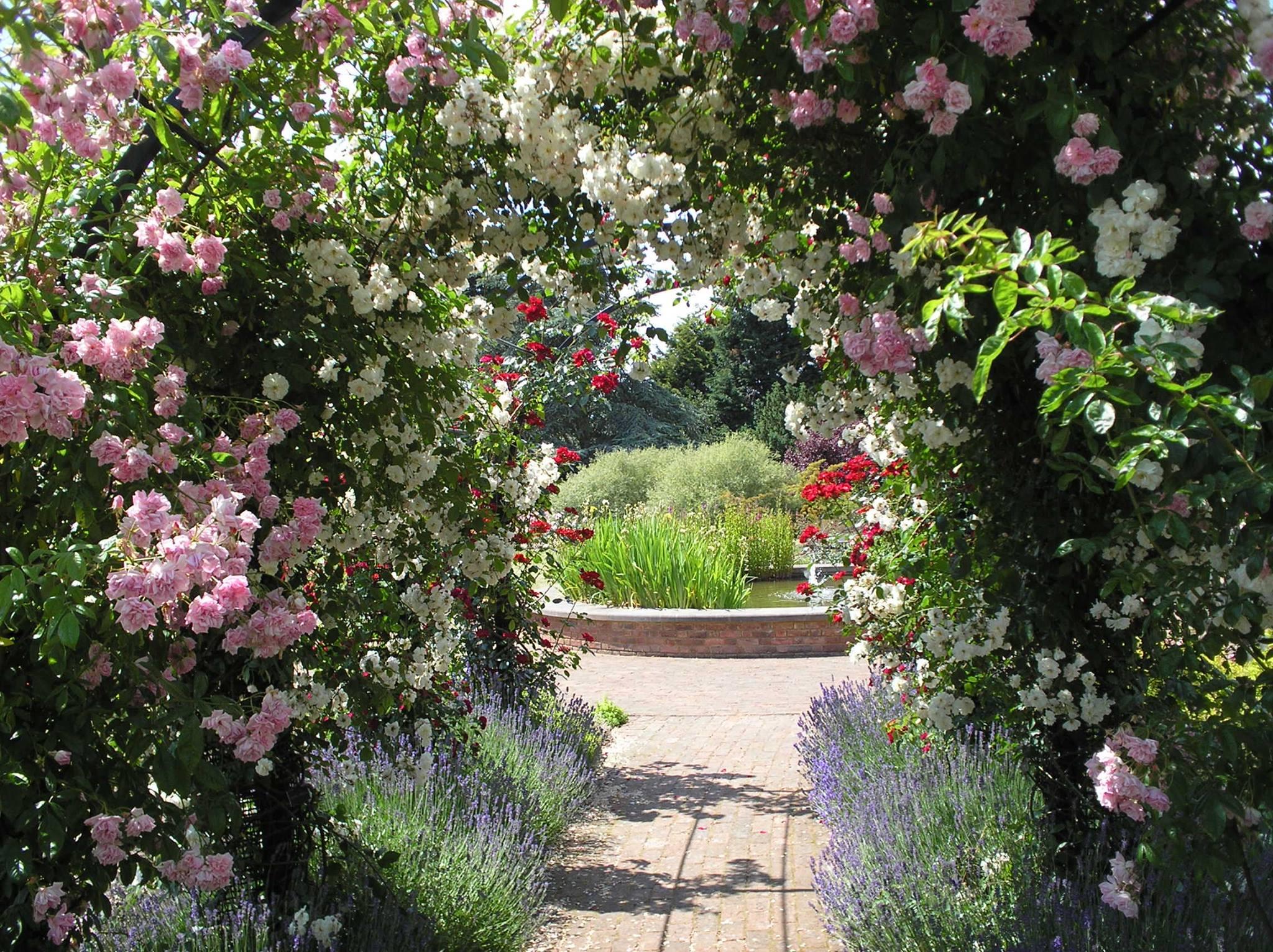 Wunderschöner Laubengang mit Rosen, ein Traum Rosentunnel