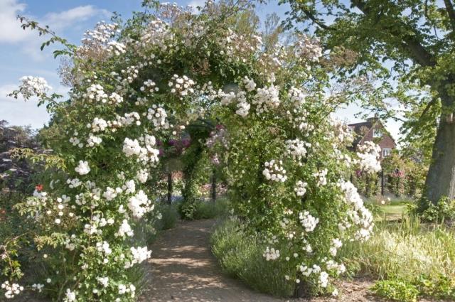 Laubengang mit weißen Blumen aus Metall