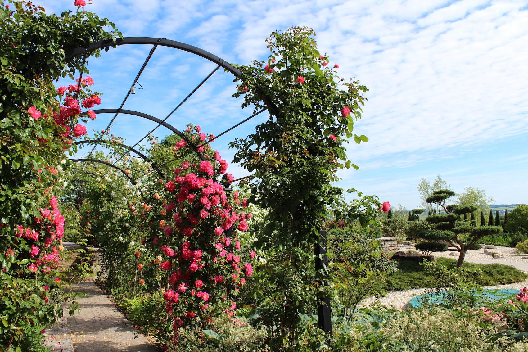 Laubengang nicht vollständig bewachsen im japanischen Garten