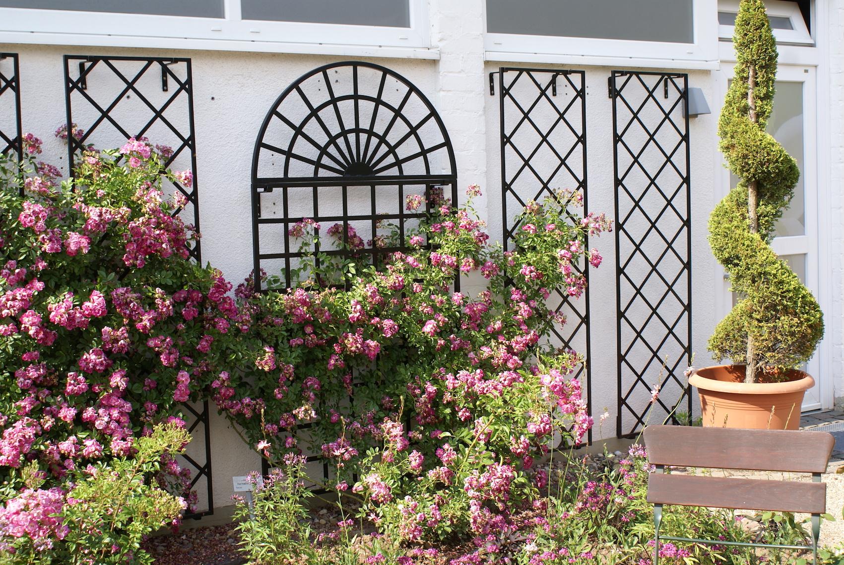 Rosenspalier Schwarz an weißer Wand